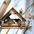 Bird feeders. Tree house for the birds, cheerful apartment — Zdjęcie stockowe