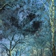 Sky through the branches in a night winter forest — Stock Photo #22164627