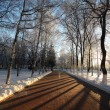 Winter landscape in the city, the walkway in the park — Stock Photo #22164685