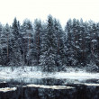 Freezing river in the forest — Stock Photo
