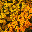 Yellow Flowers — Stock Photo #22165481
