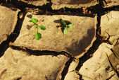 Drought, cracked ground, background, texture — Stock Photo