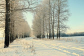 Road in winter forest, trails — Stock Photo