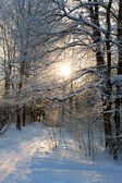 Snowy landscape in the forest — Stok fotoğraf
