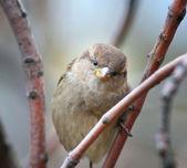 Beautiful little bird on a branch — Stock Photo
