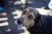 Ritratto di un cane — Foto Stock
