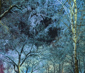 Sky through the branches in a night winter forest — Stock Photo