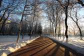Winter landscape in the city, the walkway in the park — Stock Photo