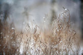 Dry winter grass background — Stock Photo