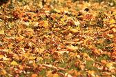 Bakgrund, gula höstlöv, fallande löv — Stockfoto
