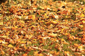 Pozadí, žlutého listí, padajícího listí — Stock fotografie