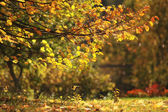 Autumn background, yellow leaves, sun, branches, falling leaves — Stock Photo