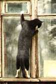 Curious cat in the window — Stock Photo