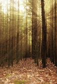 Sun's rays in a fairy forest — Foto Stock