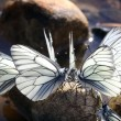 Butterflies — Stock Photo #28269939