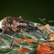 Beetle macro — Stockfoto