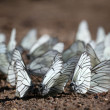 Butterflies — Stock Photo #28270255