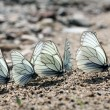 Butterflies — Stock Photo #28271093