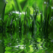 Stock Photo: Grass, dew, drop, freshness, natural background is green