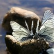 Butterflies — Stock Photo #28271563