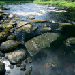 Stock Photo: River in forest with large stones