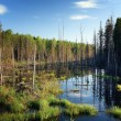 Swamp in a forest — Stock Photo #28272171
