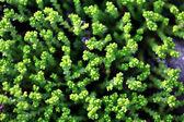 Texture grass alpine slide — Stock Photo