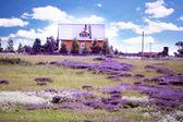 Huset omges av lavendel blommor — Stockfoto