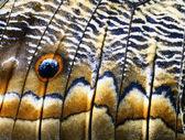 详细的热带蝴蝶翅膀的宏 — 图库照片