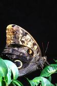 Colorful butterfly wing macro — Stock Photo