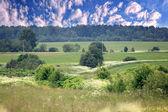 Letní lesní krajina — Stock fotografie