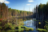 Swamp in a forest — Stock Photo
