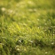 Lawn, green grass — Foto Stock