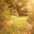 Path in the autumn forest — Stock Photo #34883137