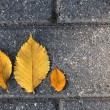Fallen yellow leaves — Stock Photo