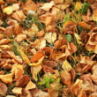 Fallen leaves on the lawn — Stockfoto