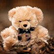 Teddy Bear — Stock fotografie