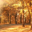 Road in the autumn forest sun — Stock Photo