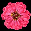 Red gerbera on  background — Stock fotografie