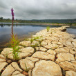 Stock Photo: Banks of river