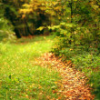 Path in the autumn forest — Stock Photo #34885711