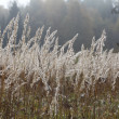 Sedge grass autumn — Stock Photo #34886915