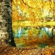 Autumn at the pond park — Stock Photo