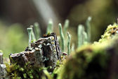 Magical world of macro moss — Stock Photo