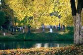 Autumn at the pond park — Stock Photo