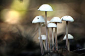 Small poisonous mushrooms — Stock Photo