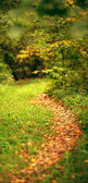 Path in the autumn forest — Stock Photo