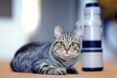 Cat and the camera lens — Stock Photo