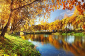 Pond in autumn — Stock Photo