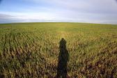 Campo y cielo — Foto de Stock